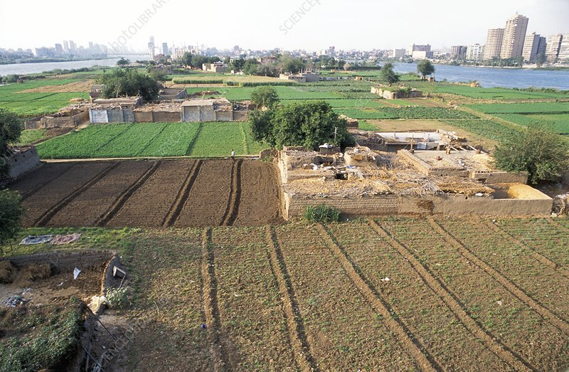 Farmland by the Nile, Egypt