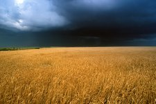 Stormy sky over wheat fields
