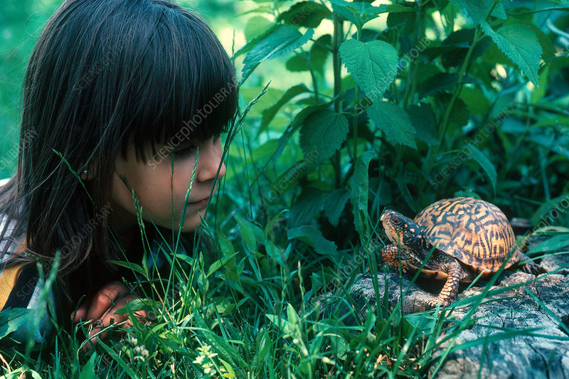 Girl and Box Turtle