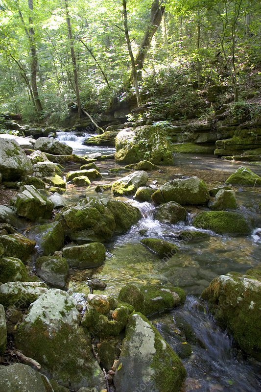 Stream in Ouachita National Forest