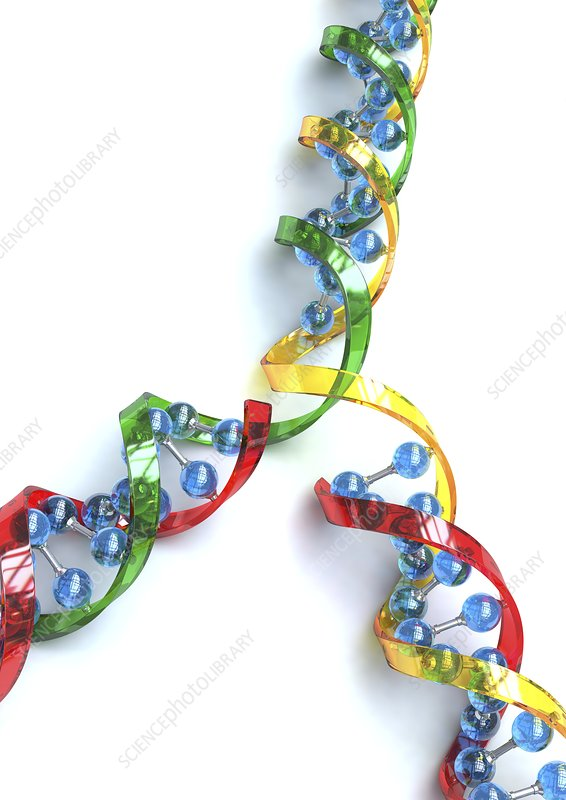 DNA replication, artwork