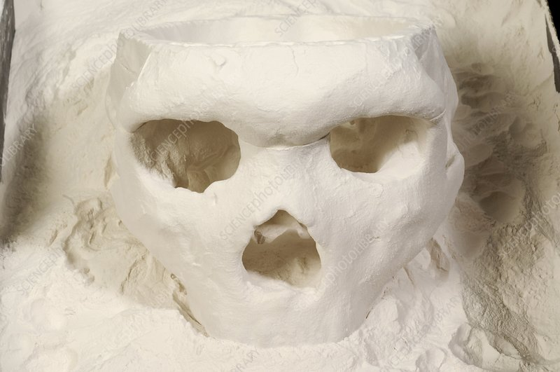 3D cast of hominid skull