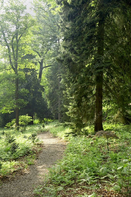 Enchanted Wood, Belvoir Castle