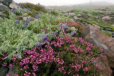Mountain heathland