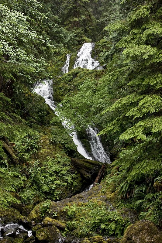Waterfalls, Quinault Valley, USA