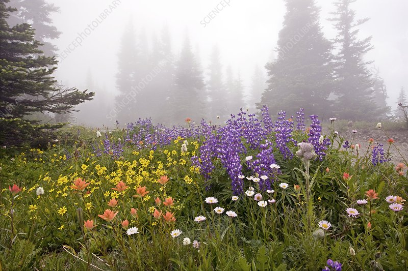 Mountain meadow in the mist