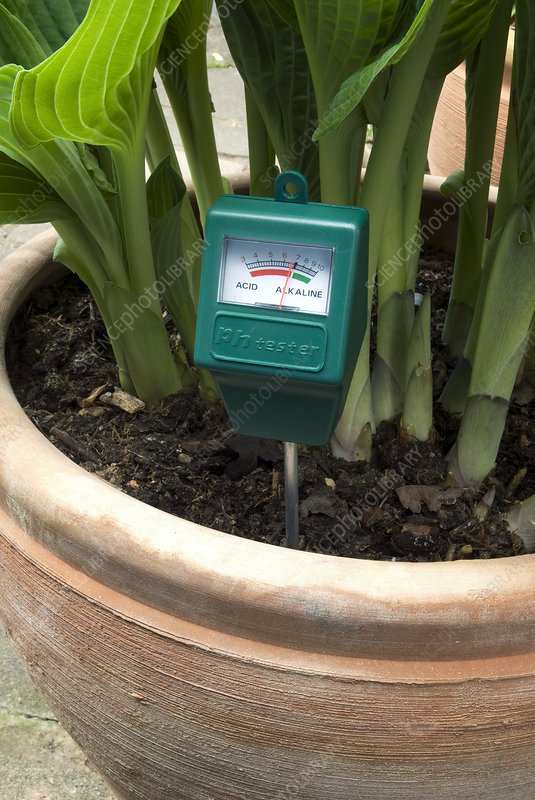 Soil pH meter in a plant pot