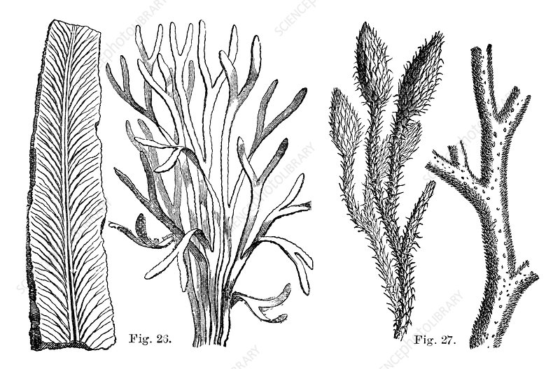 Cryptogamic plants, 19th century artwork