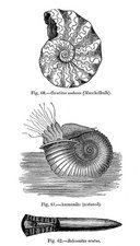 Prehistoric marine invertebrates, artwork