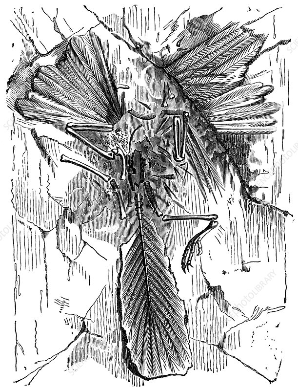 Archaeopteryx, 19th century artwork