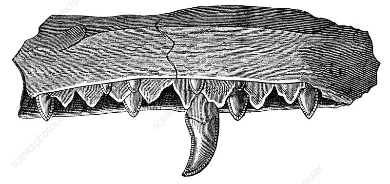 Megalosaurus jaw, 19th century artwork