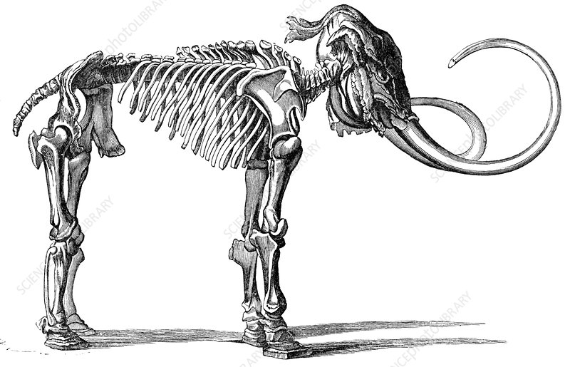 Oncoul Mammoth, 19th century artwork