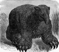 Megatherium, 19th century artwork