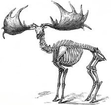 Giant deer, 19th century artwork