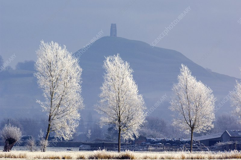Frost-covered trees and Glastonbury Tor