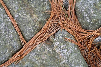 Pine needles on granite rocks