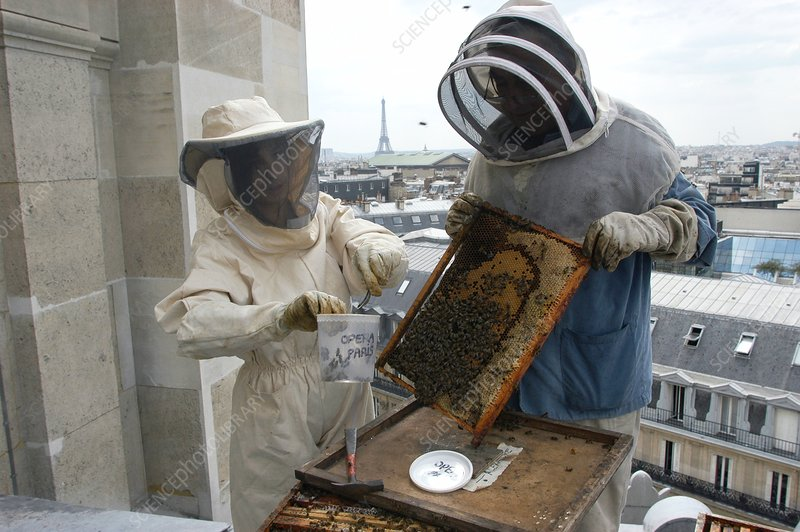 Pollution detection using bees