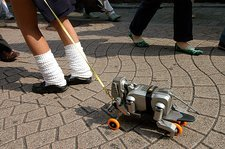 Walking an AIBO robot dog