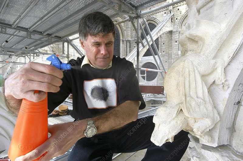 Bacterial preservation of stone monuments