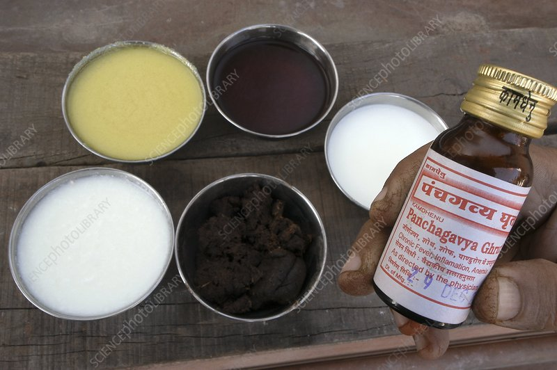 Ayurvedic cow product remedies, India