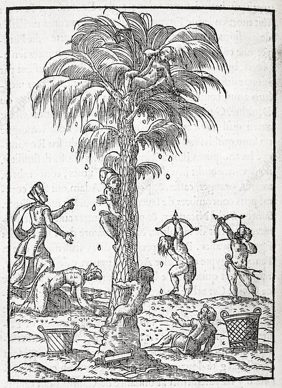 Egyptian palm tree, 16th century artwork