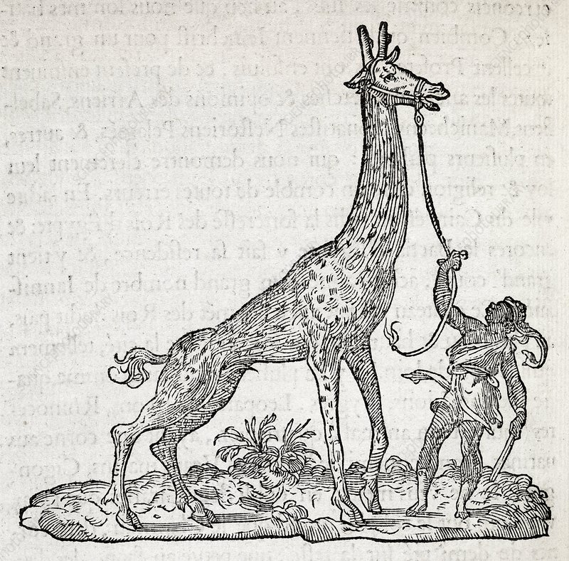 Giraffe, 16th century artwork