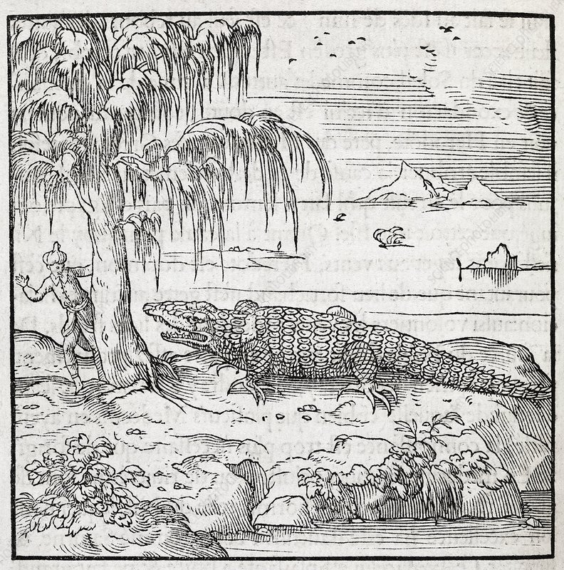 Nile crocodile, 16th century artwork