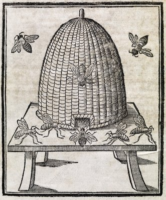 Bees and beehive, 17th century artwork