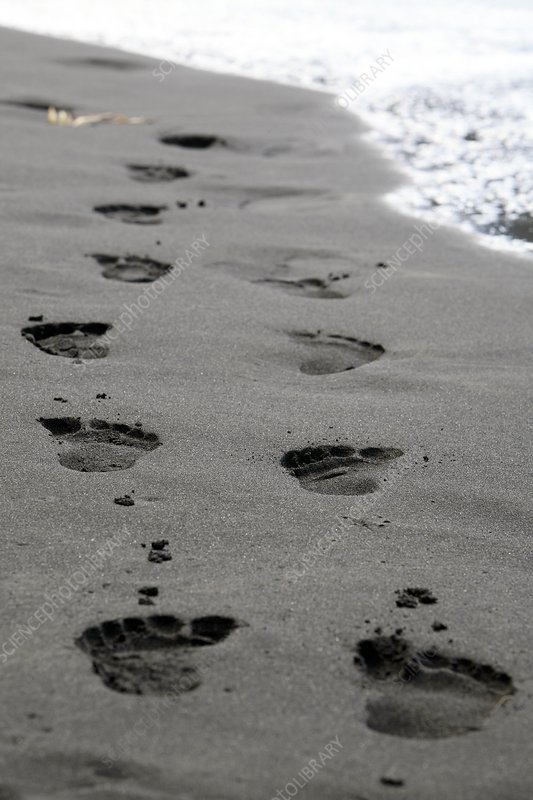 Footprints in black volcanic sand