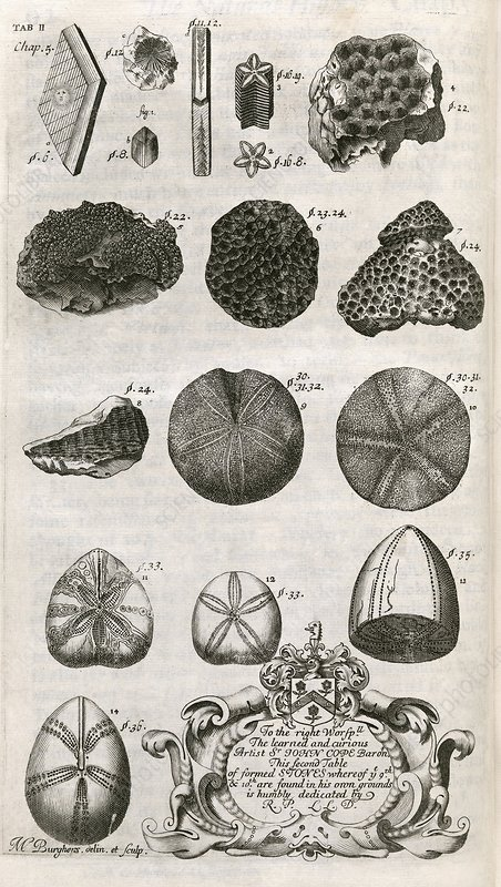 Fossils, 18th century artwork