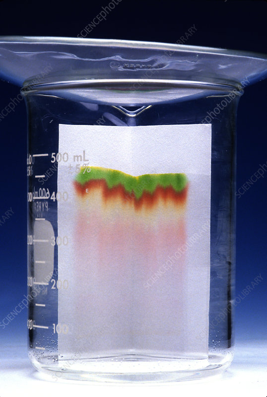 Paper Chromatography of Ink
