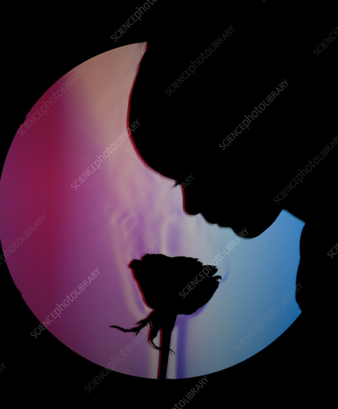 Schlieren Image of a Boy Smelling a Rose