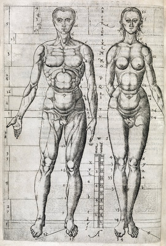 Human anatomy, 16th century artwork