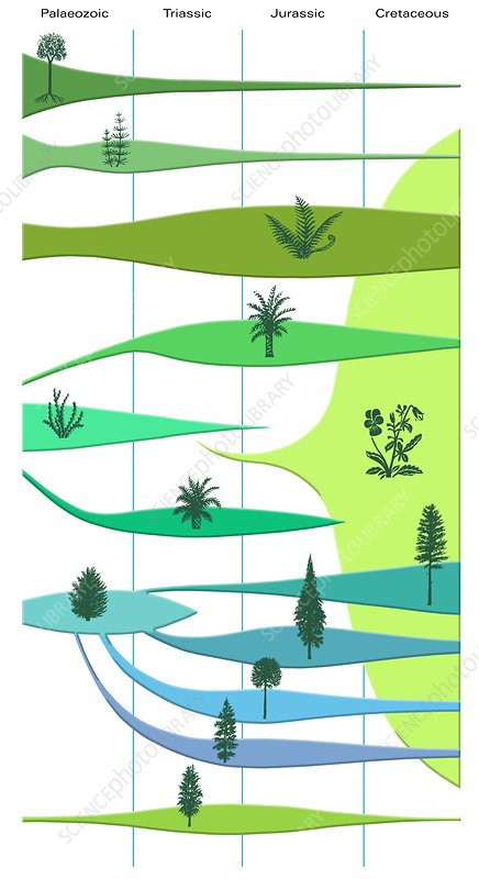 Plant evolution, diagram