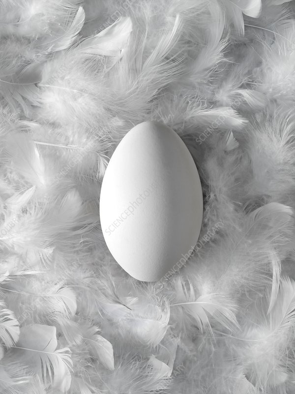 Egg on feathers, conceptual image