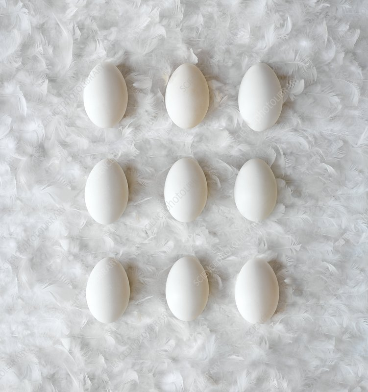 Eggs on feathers, conceptual image