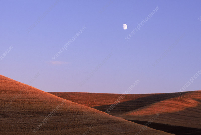 Moon over Wheat Fields
