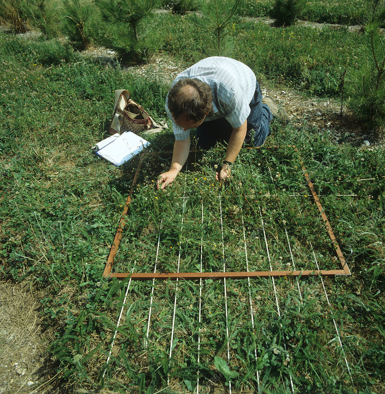 Research technician assessing weed popula