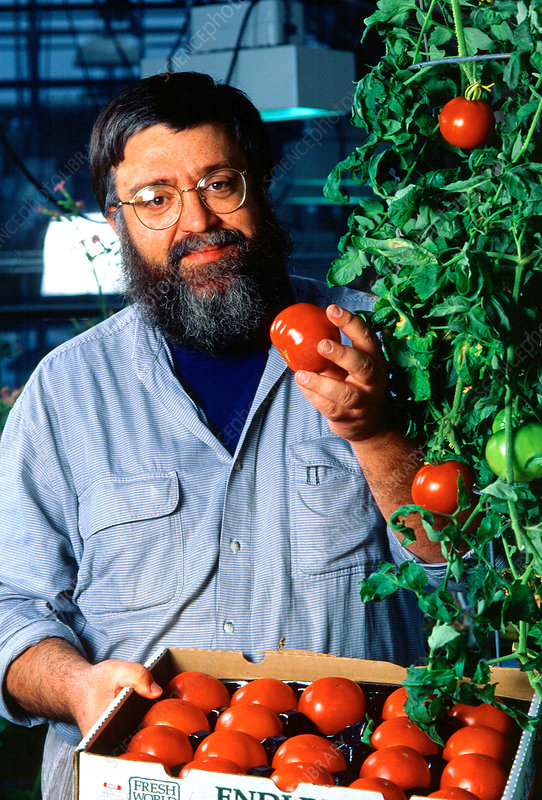 Plant Physiologist With Tomatoes