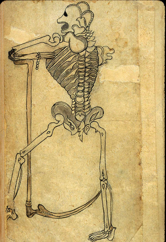 Persian Anatomical Illustration