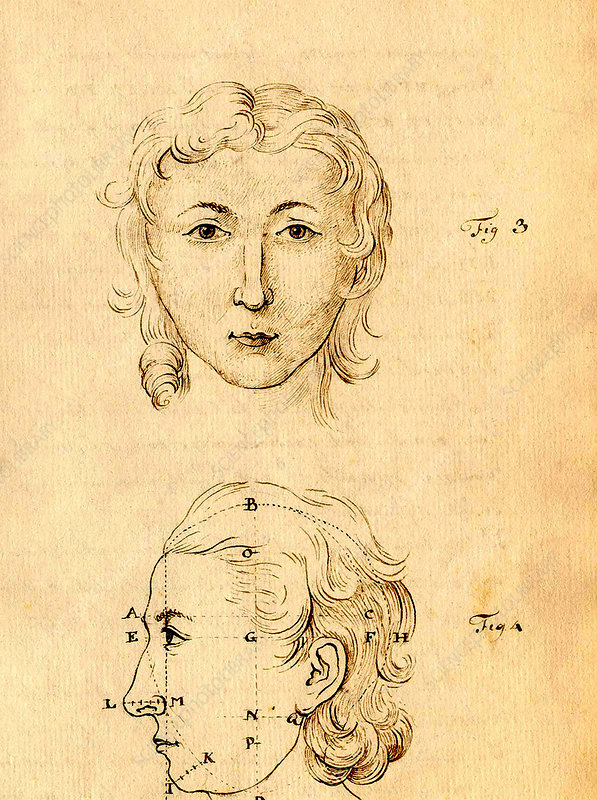 Physiognomical Illustration of Human Head