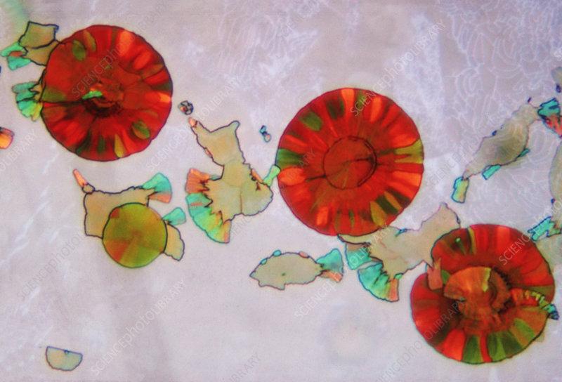 Minerals in Mica