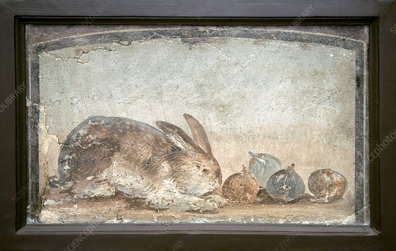 Rabbit and figs, Roman fresco