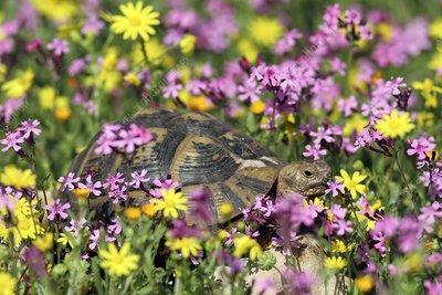 Wild Flowers of Greece - Mediterraneo Publications