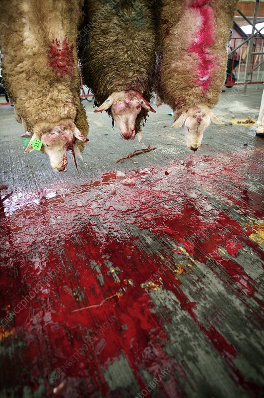 Islamic ritual slaughter