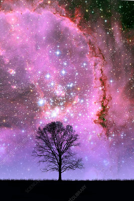 Tree and Small Magellanic Cloud (Composit