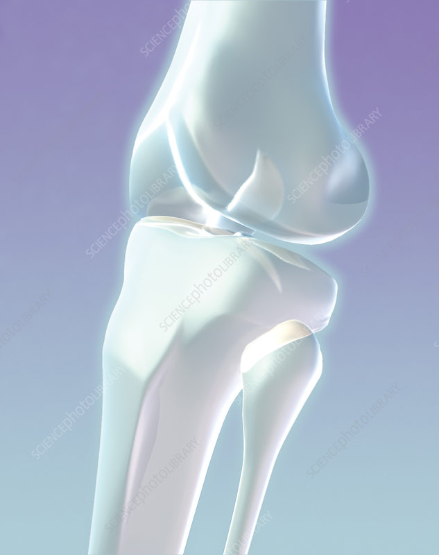 Stylized Knee Joint Illustration