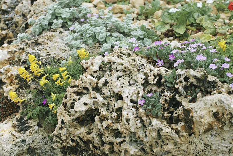 Mixed planting in Tufa Rocks