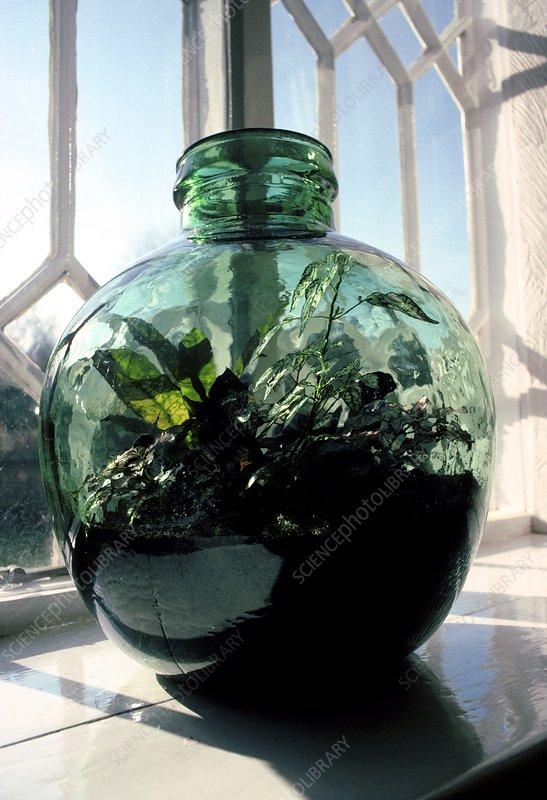 Bottle garden on a windowsill