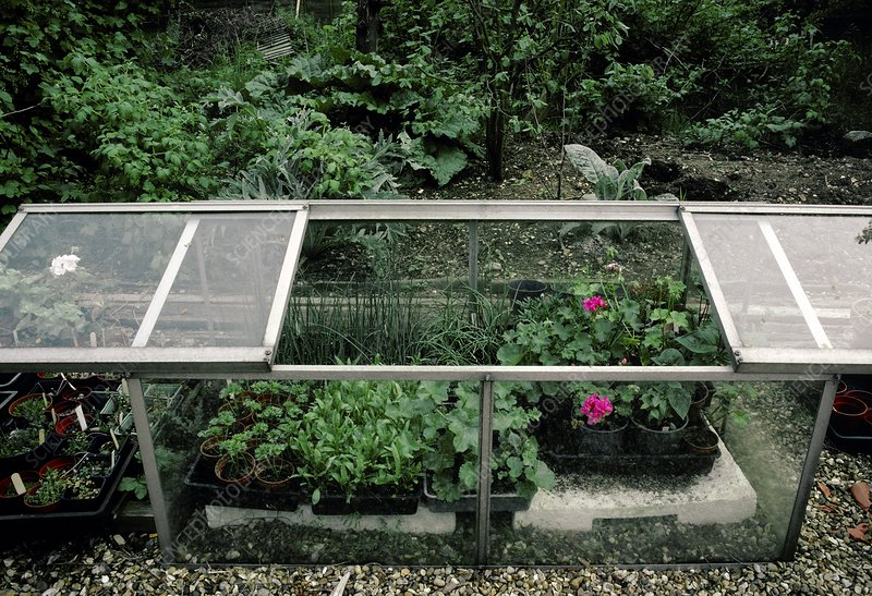 Plants growing in a cold frame